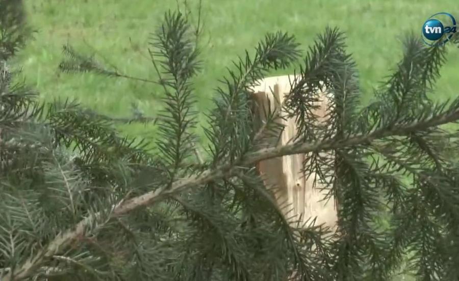 Uszkodzone drzewa
