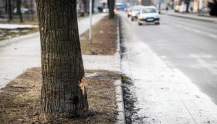 Miejsce, w którym doszło do wypadku z udziałem auta, którym jechała b. premier Beata Szydło