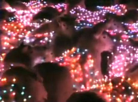 Zobacz film o ... LED-owych barankach