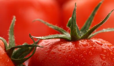 Likopen z pomidorów poprawia męską płodność