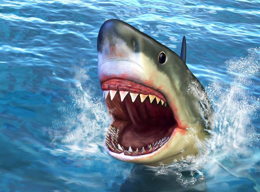 Piotr Myszka zawadził o rekina