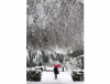 Zima w Genewie
