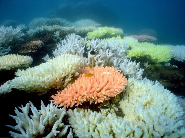 Piękna rafa koralowa w Australii