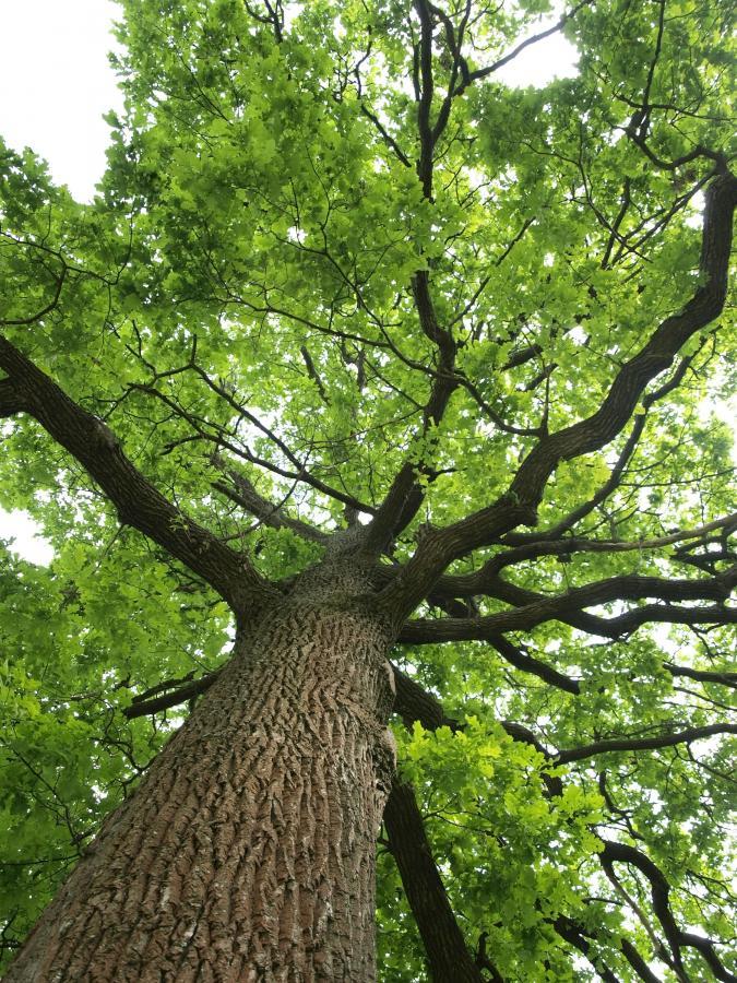 Mężczyzna został przywiązany do drzewa folią (fot. Shutterstock)