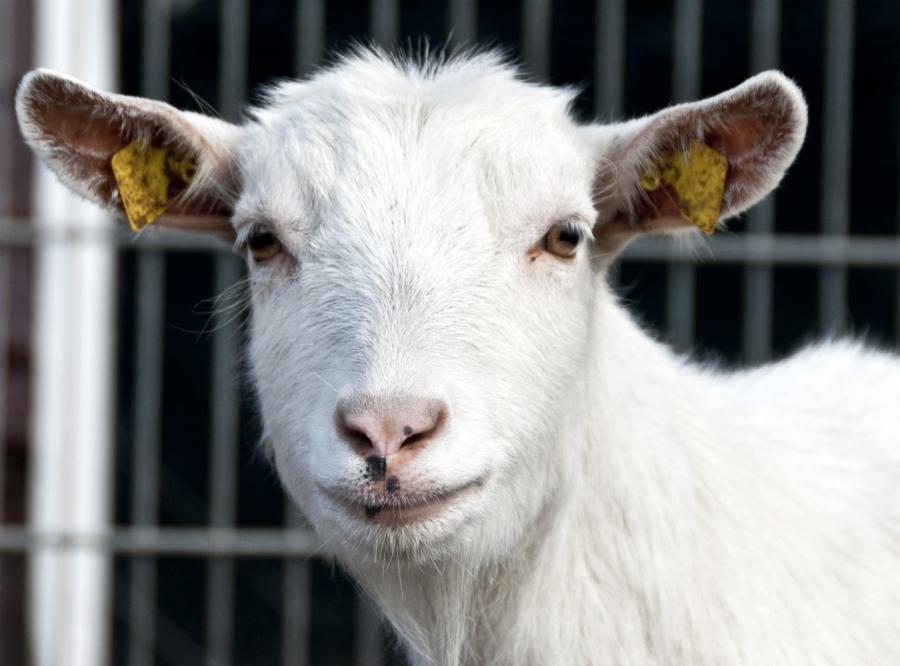 Koza pobiegnie w norweskim półmaratonie