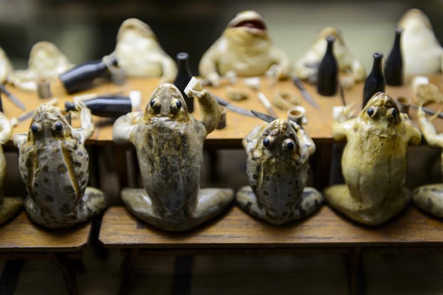 Żabie Muzeum
