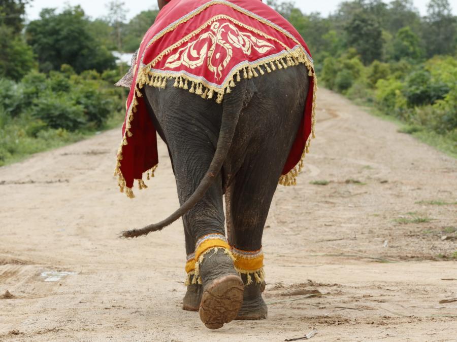 Słoń w starożytnym tajskim kostiumie