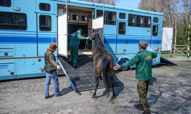 Shirley Watts zabrała swoje konie z Janowa Podlaskiego [ZDJĘCIA]