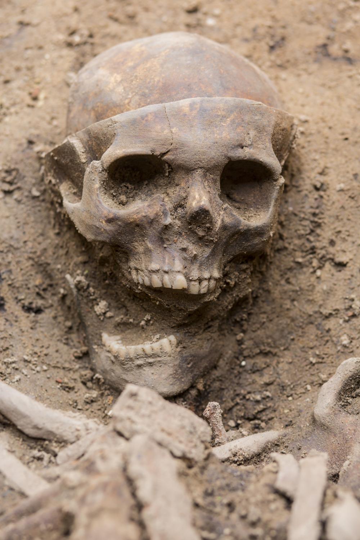 Szkielet odkryty w Poznaniu