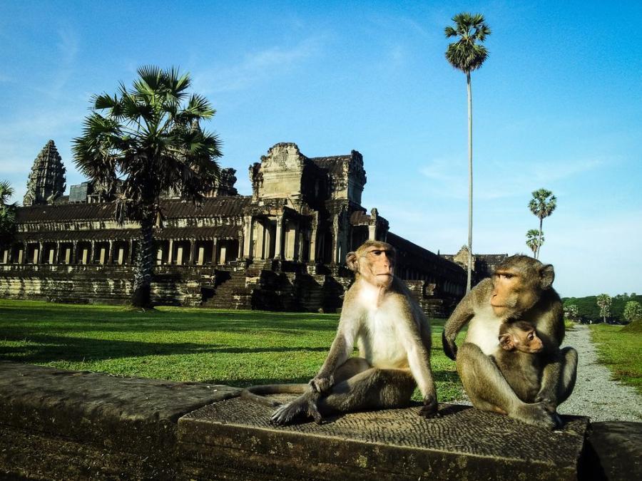 Angkor Wat, Kambodża; fot. T. Bogusz / Pirania na kolację