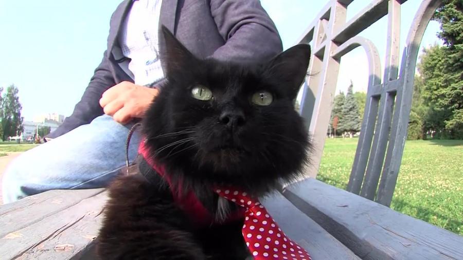 Kot parlamentarzysta? Właściciel kota z Kostromy zgłosił swojego pupila do wyborów